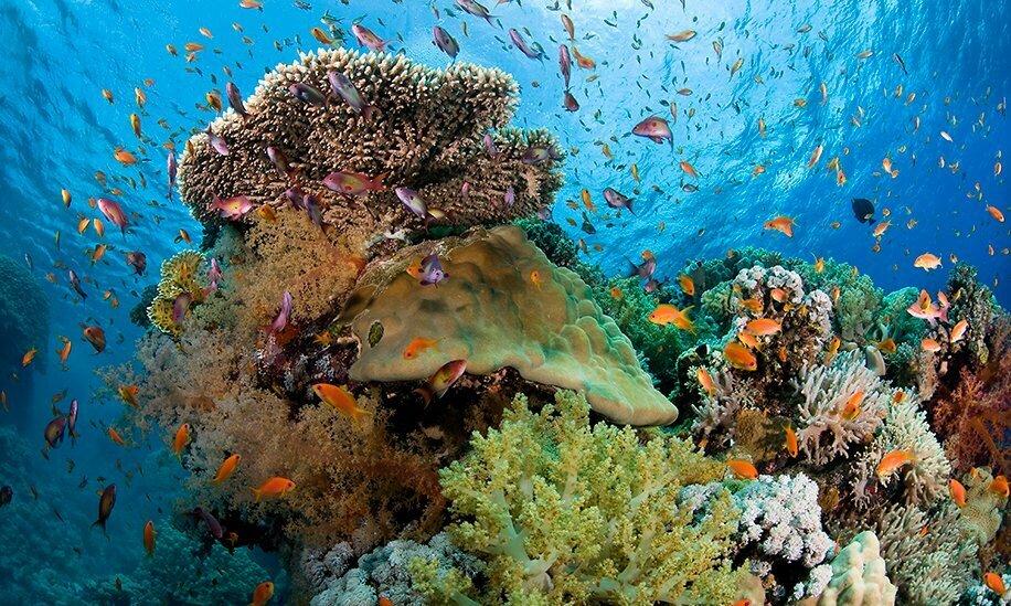 coral-reef-nha-trang